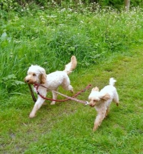 dogs with leads2